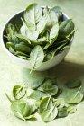 Foglie di spinaci freschi del bambino — Foto stock