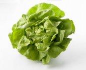 Lechuga verde fresca - foto de stock