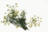 Aneto fresco con i fiori — Foto stock