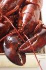 Aragosta in cestino di cippato — Foto stock