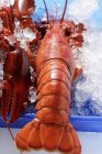 Lobsters on crushed ice — Stock Photo