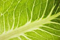 Савойский капустный лист — стоковое фото