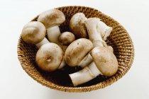 신선한 표고버섯 — Foto stock