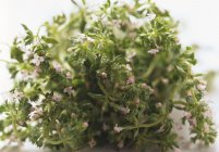Fresh Thyme with flowers — Stock Photo