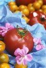 Tomates rouges et jaunes — Photo de stock