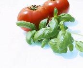 Свежий базилик и помидоры — стоковое фото