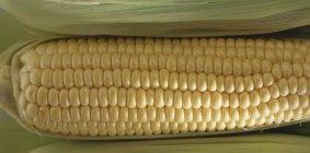 Свежего кукурузного початка — стоковое фото