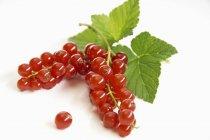 Groseilles rouges fraîches mûres — Photo de stock