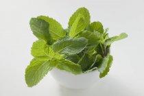 Menta fresca verde tailandese — Foto stock