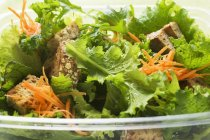 Листя салат з моркви — стокове фото