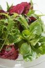 Ensalada mixta de hojas - foto de stock
