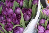 Крупный план фиолетовых тюльпанов с листьями в букетах — стоковое фото