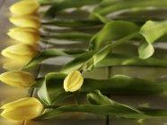 Vista de cerca de tulipanes amarillos en una fila - foto de stock