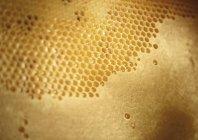 Nid d'abeille jaune doux — Photo de stock