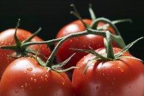 Quattro pomodori sulla vite — Foto stock