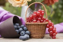 Fresh picked blueberries and redcurrants — Stock Photo