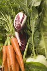 Свежая морковь с радиккио и кольраби — стоковое фото
