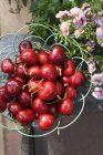 Fresche ciliegie mature — Foto stock