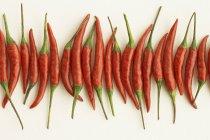 Красный Чили перец — стоковое фото