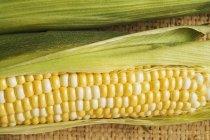 Два початков кукурузы с шелухой — стоковое фото