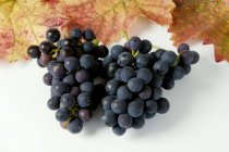 Racimos de uva negra Sptburgunder - foto de stock