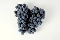 Racimos de uva negra Regent - foto de stock