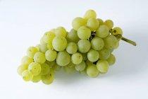Uve verdi fresche mature — Foto stock