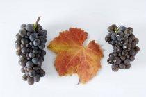 Ramos de uvas negras - foto de stock