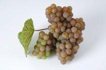 Cacho de uvas traminer — Fotografia de Stock