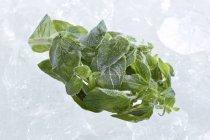 Заморожені естрагон листя — стокове фото