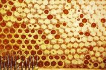 Peine oneycomb y tenedor de desencapsulamiento - foto de stock