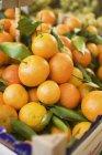 Свіжі стиглі мандарини клементини — стокове фото