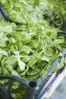 Свежий салат кукуруза в ящике — стоковое фото