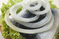 Bread roll filled with herring — Stock Photo