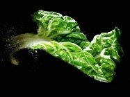 Fresh chard leaf in water — Stock Photo