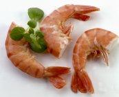 Three king prawns, close-up — Stock Photo