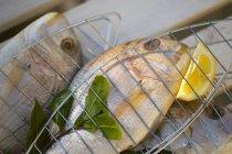 Fresh sea bream fish — Stock Photo