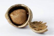 Сухие потрескавшиеся фундук — стоковое фото