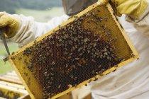 Дневное время обрезки зрения пчеловод, стремящейся улей — стоковое фото