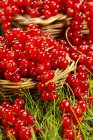 Fresh picked redcurrants — Stock Photo