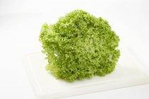 Lollo bionda lettuce — Stock Photo