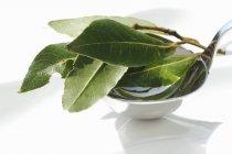 Folhas de louro frescas em concha — Fotografia de Stock