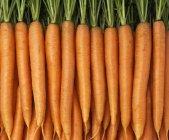 Carote fresche mature con cime — Foto stock