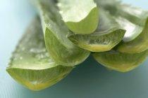 Fresh-cut aloe vera shoots — Stock Photo