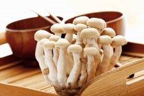 Setas Shimeji en bandeja de madera - foto de stock