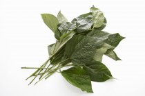 Raw Cha plu hojas sobre fondo blanco - foto de stock