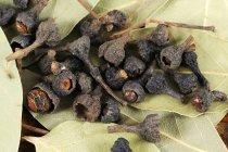 Closeup view of dried cinnamon buds — Stock Photo