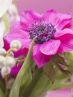 Closeup view of pink anemone in vase of spring flowers — Stock Photo