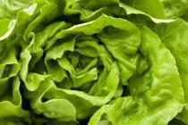 Свежий зеленый салат — стоковое фото