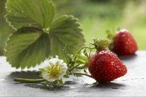 Frische Erdbeeren mit Blumen und Blätter — Stockfoto